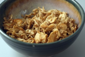 cooked cauliflower mushroom, Sparassis crispa, also called the noodle mushroom
