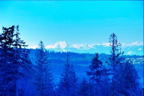 Keeping Away the Gloom of Northwest Winter