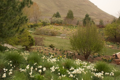 Red Butte Garden in the odd light of an approaching snowstorm.