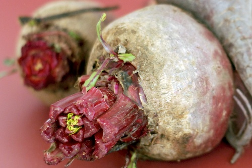 two beets with tops cut